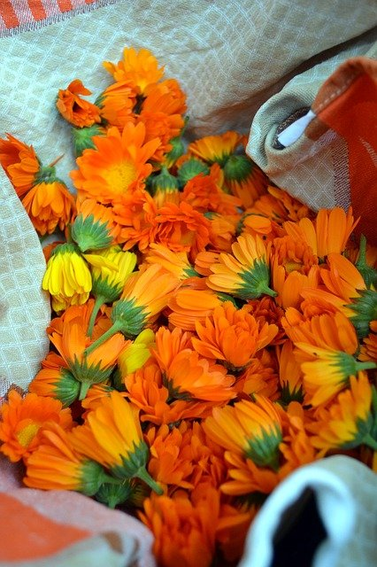healing properties of calendula