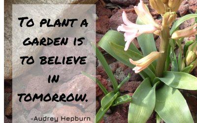 Best Garden Quotes (60 quotes)