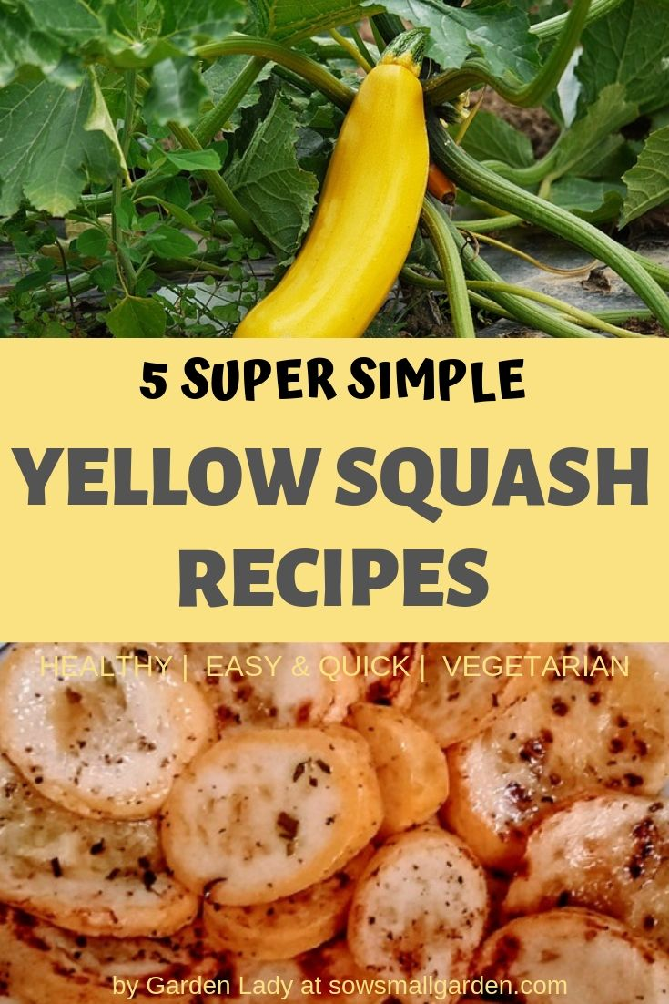 Yellow squash recipes