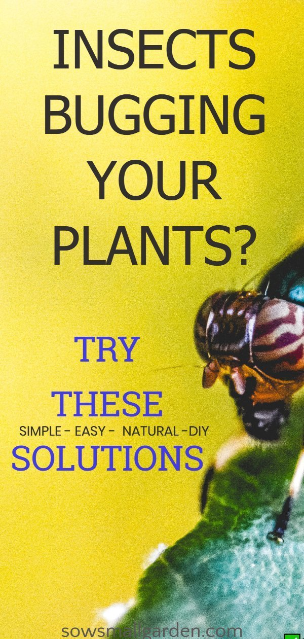 How To Keep Bugs From Eating Plants Sow Small Garden