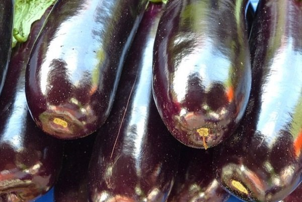 eggplant with shiny skin is perfect for cooking