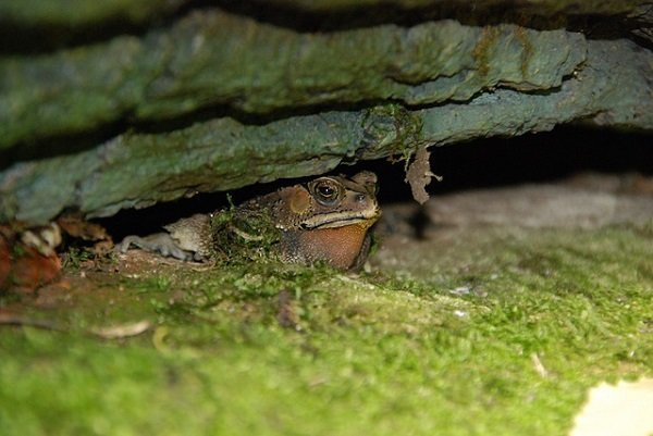 toad under the branch