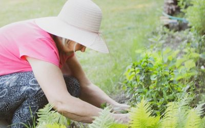 Why garden? (14 Benefits of Gardening backed by Science)