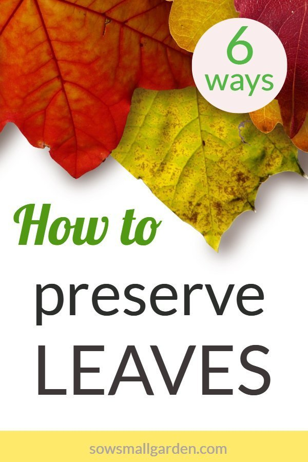 6 easy ways to preserve leaves
