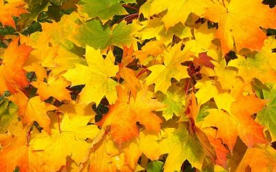 How to Preserve Leaves (6 simple ways)