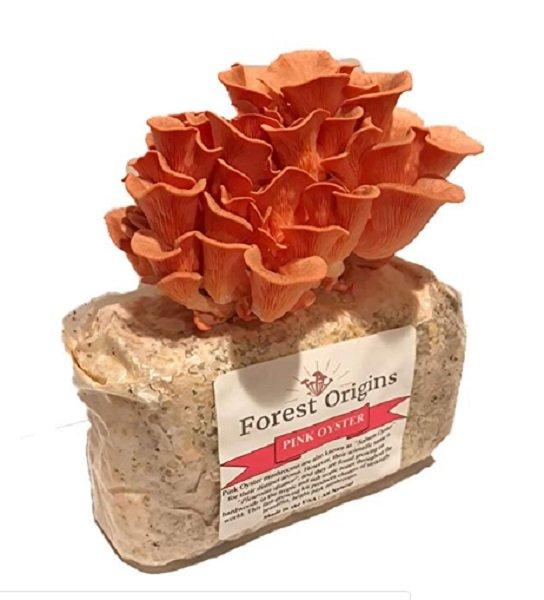 christmas gift - mushroom kit