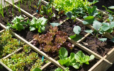 Square foot gardening guide: how to grow more produce in less space