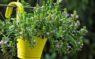 A container garden for small spaces: all you need to know