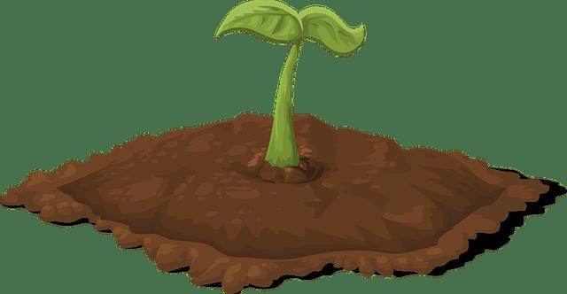 growing small garden advice