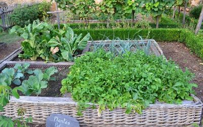 A kitchen garden (potager) – great idea for small spaces