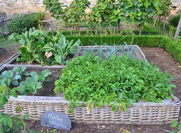 A Kitchen Garden Potager Great Idea For Small Spaces Sow