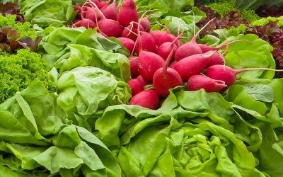 5 Must Have Vegetables to Plant in Spring (for early harvest)