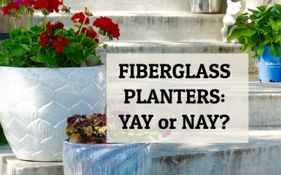 Fiberglass Planters: Yay or Nay?