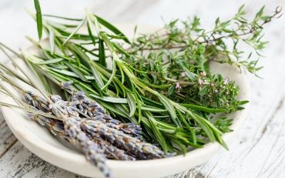 What Are Herbs?