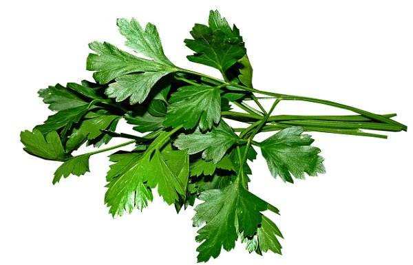 parsley - herb for a garden