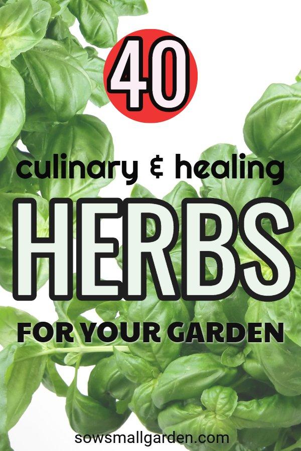 list of 40 herbs for a garden