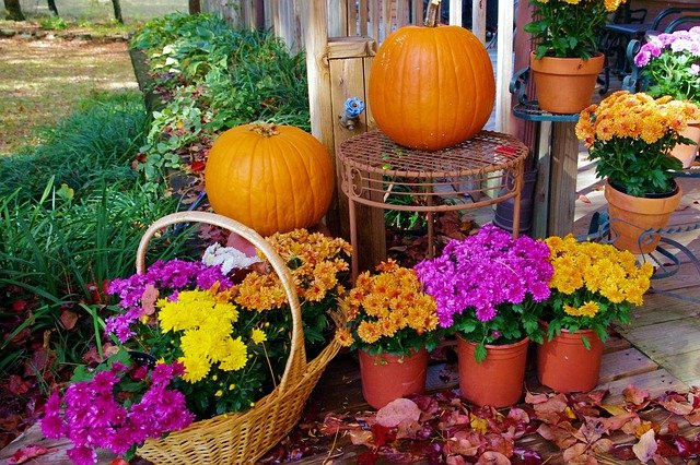 fall decorating ideas: mums and pumpkins