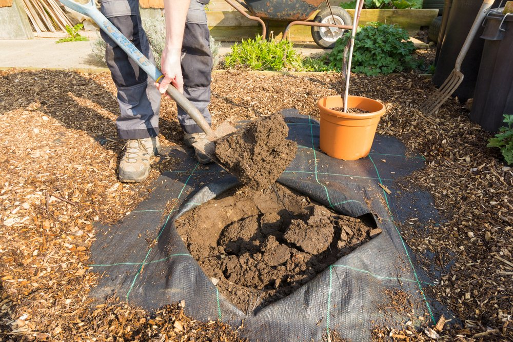gardener digging a hole for planting a fruit tree