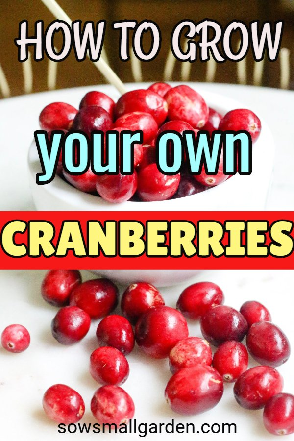 how to grow your own cranberries