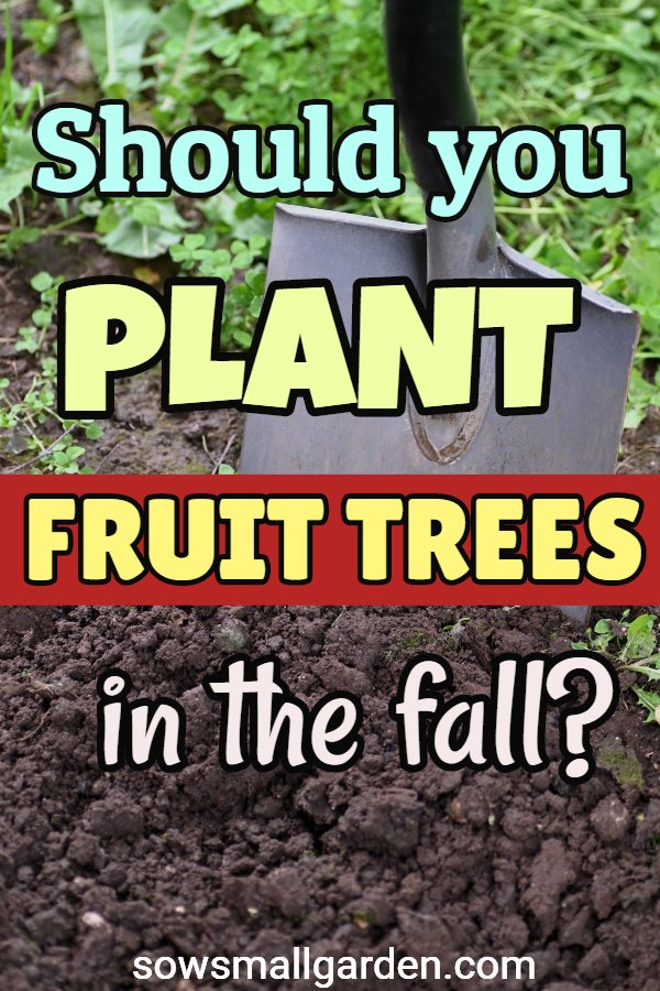 tips on planting fruit trees in the fall