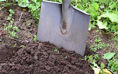 Planting Fruit Trees in Fall
