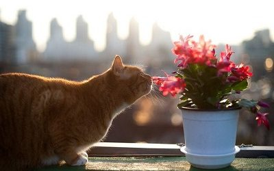 Cats and succulents: succulents toxic to cats and cat safe succulents