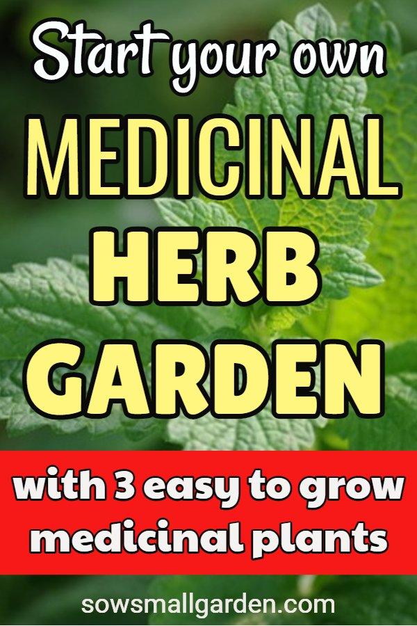 3 medicinal plants for medicinal herb garden