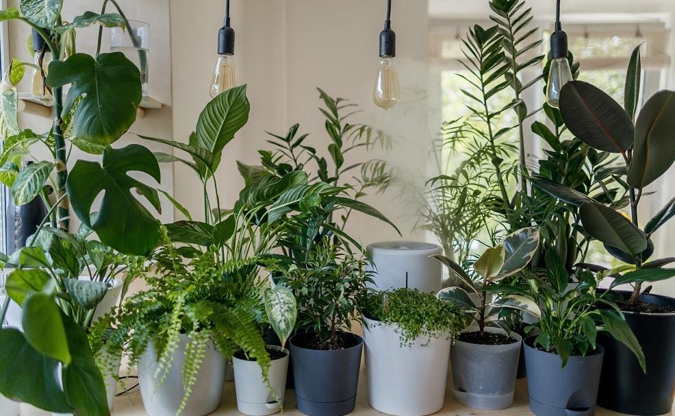 10 Indoor Plants that Grow Fast
