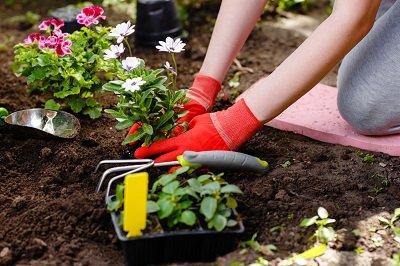 Best Garden Kneeling Pad (3 Top Winners!)