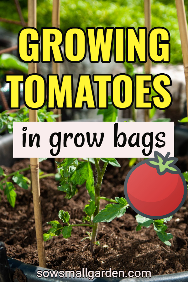 tips on growing tomatoes in grow bags