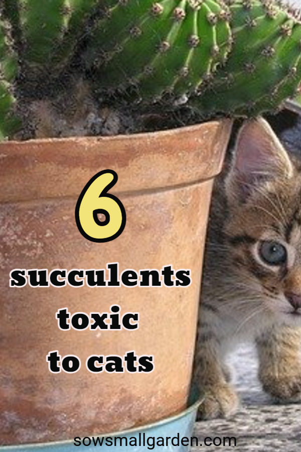 a list of toxic to cats succulents
