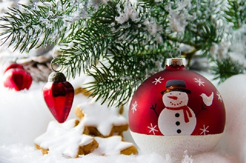 Best Christmas Tree Types and Varieties for Happy Holidays