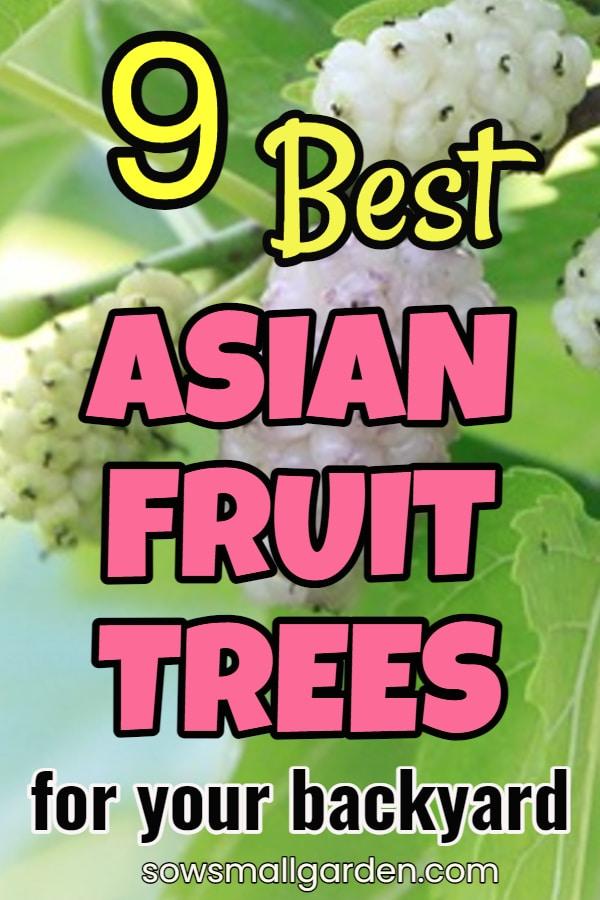 Asian fruit trees for your garden