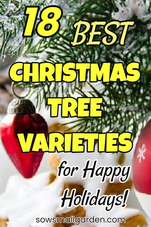 best real Christmas tree varieties