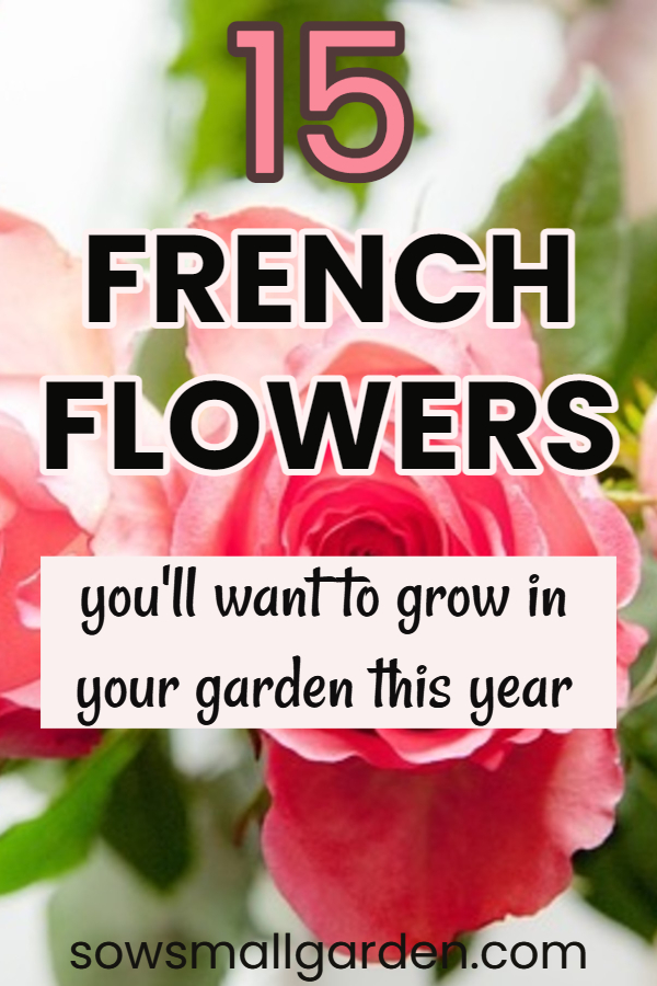The French flowers you'll want to grow in your garden this year