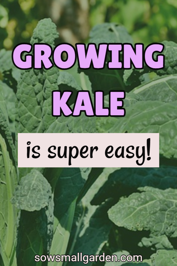 growing kale guide