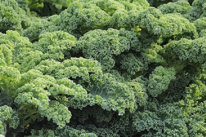 growing kale is easy