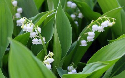 List of French Flowers You Can Grow in Your Garden