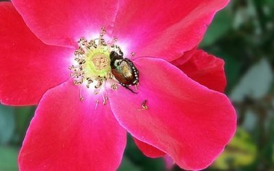 10 Worst Garden Pests: How to Identify and Control Them
