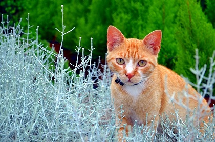 Top 9 Cat Repellent Plants to Keep Cats Out of Your Garden