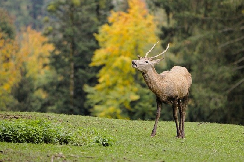 deer - garden pest