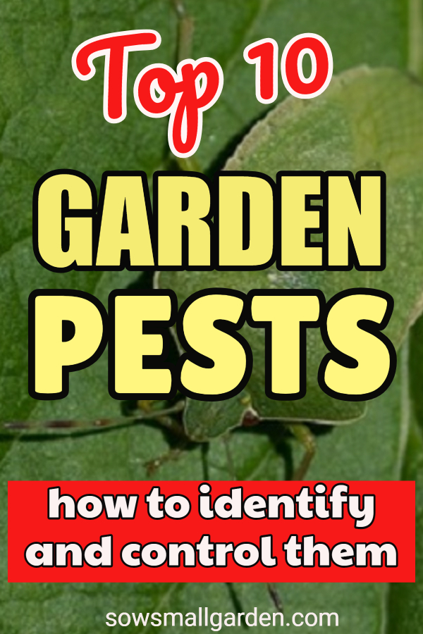 common garden pests (with pictures)