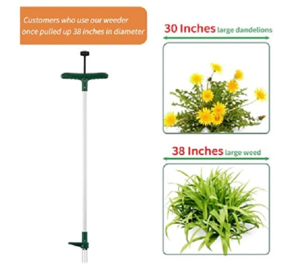 stand up weed puller makes weeding  easy