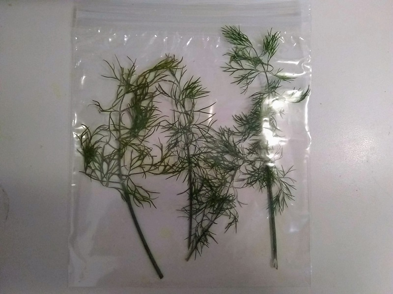 freezing whole dill sprigs