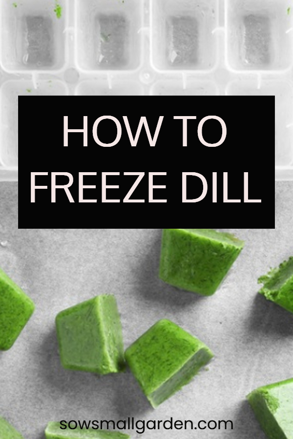 best wat to freeze and preserve dill