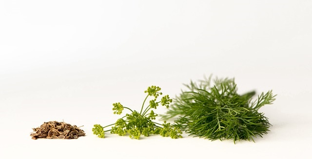 what parts of dill you can use